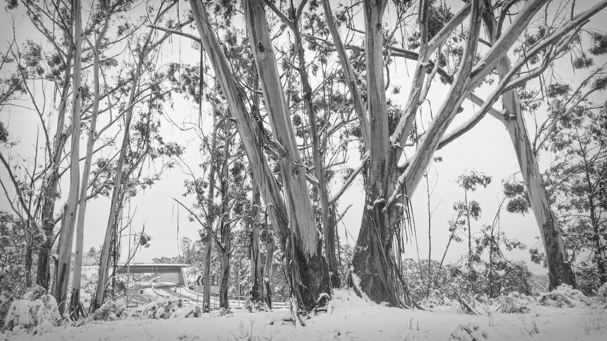 Katoomba NSW Photography by James Blackwell