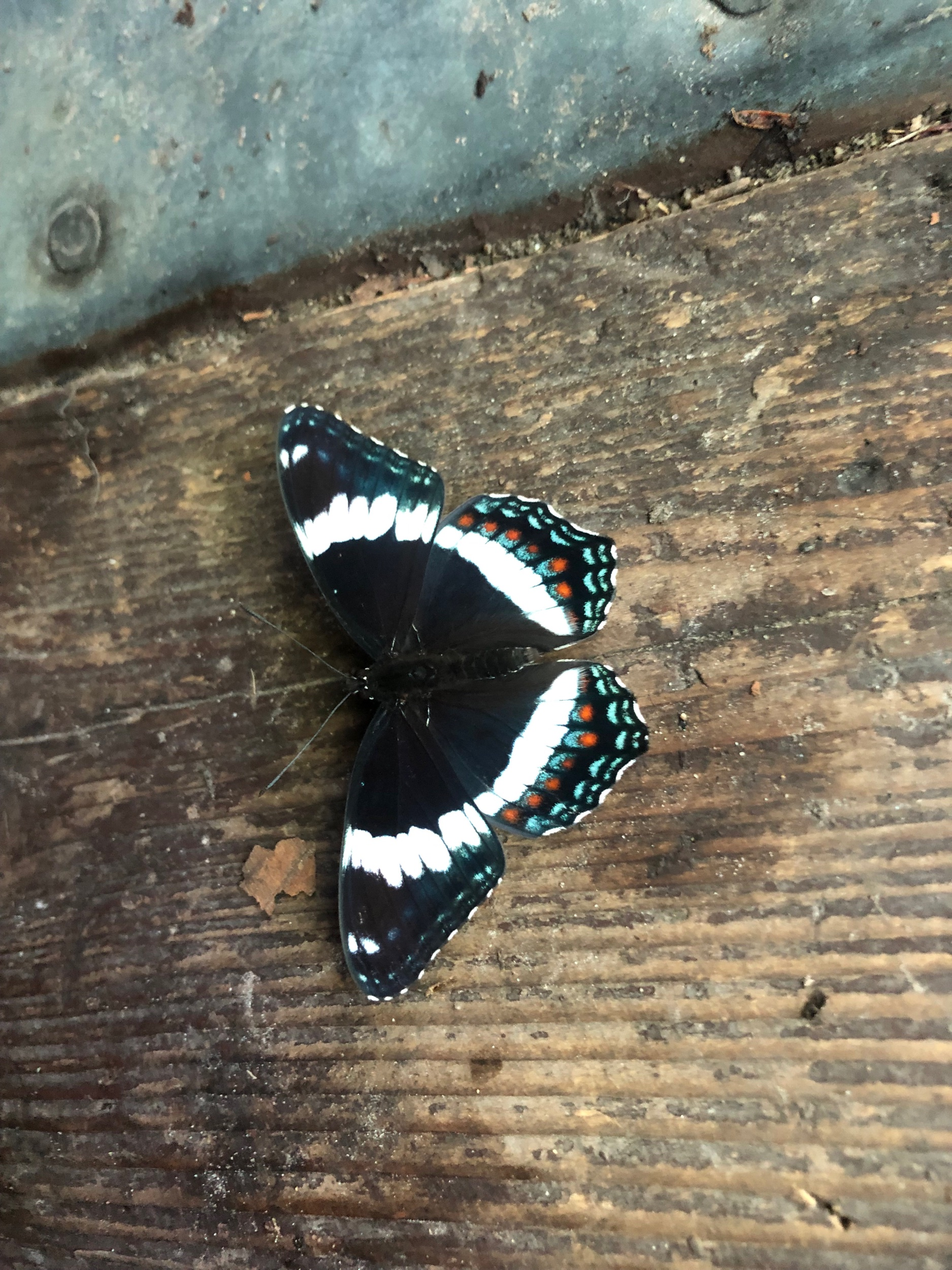 Such a Cool Butterfly