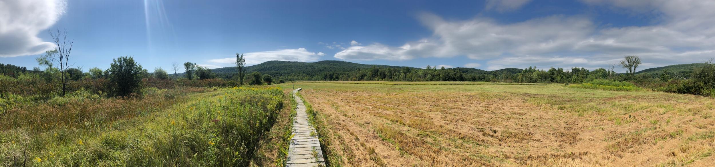 Beautiful Fields with a Boardwalk
