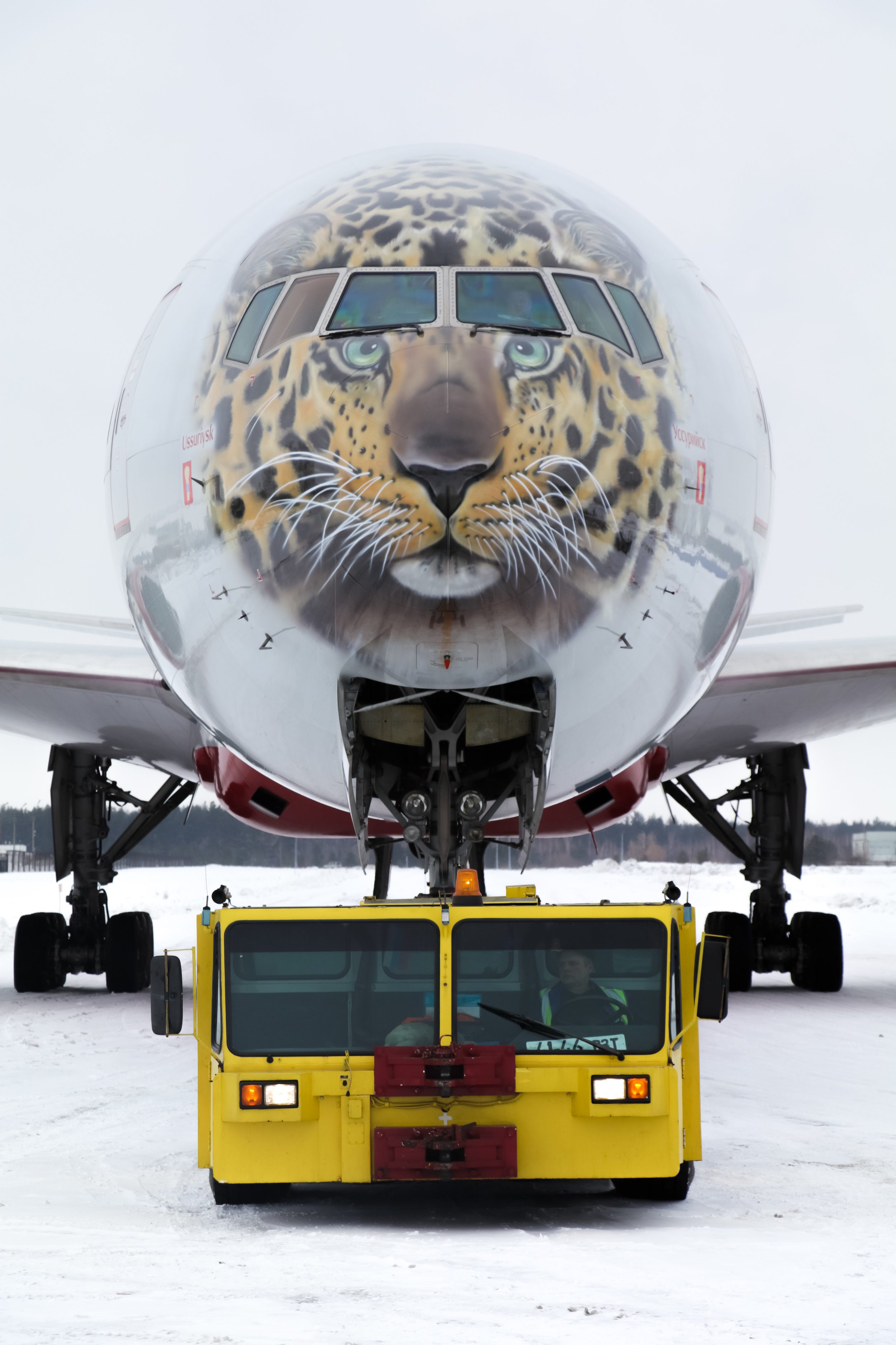 Leopard livery Russian airline