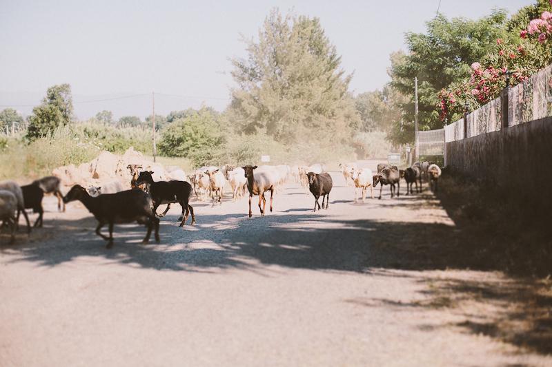 CorsicaRoadtrip0159.jpg