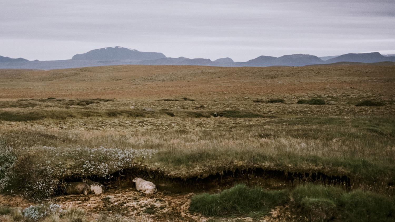 Iceland_2014-361-2.jpg