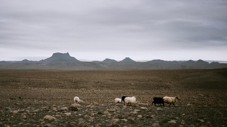Iceland_2014-358-2.jpg