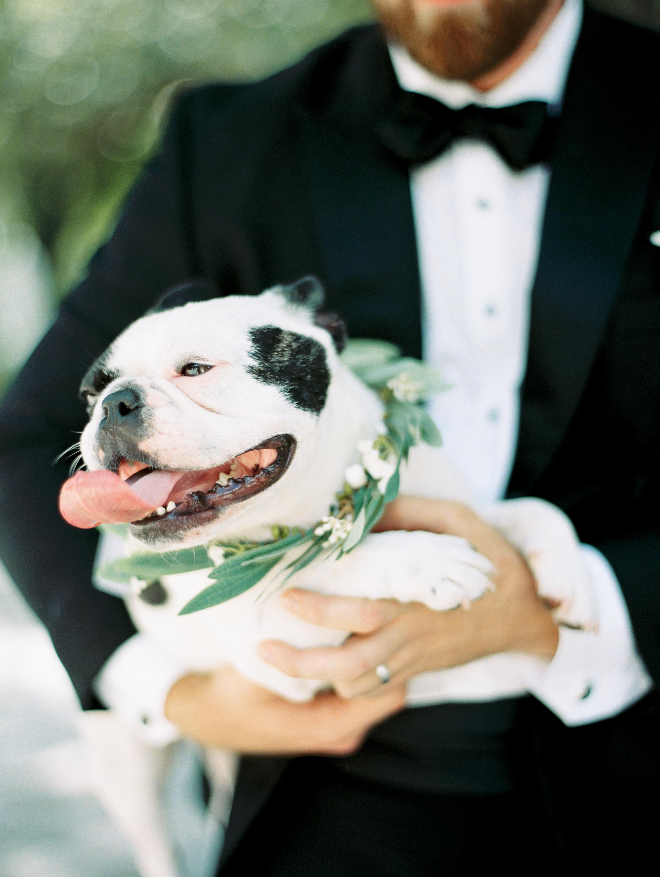 dog with wedding greenery collar