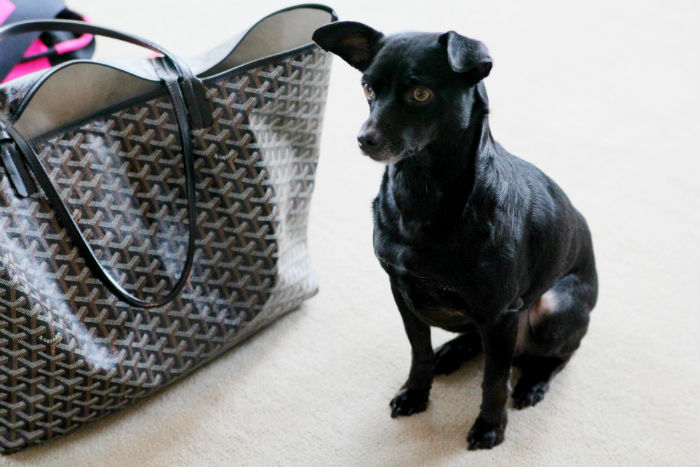 denise_junell_nordstrom_designer_handbags_buyer_1.jpg
