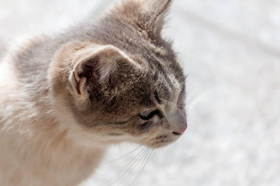 Friendly neighbourhood Drak Yerpa cat