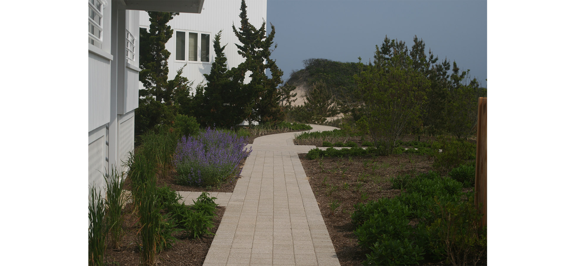 Pathway - edited.jpg
