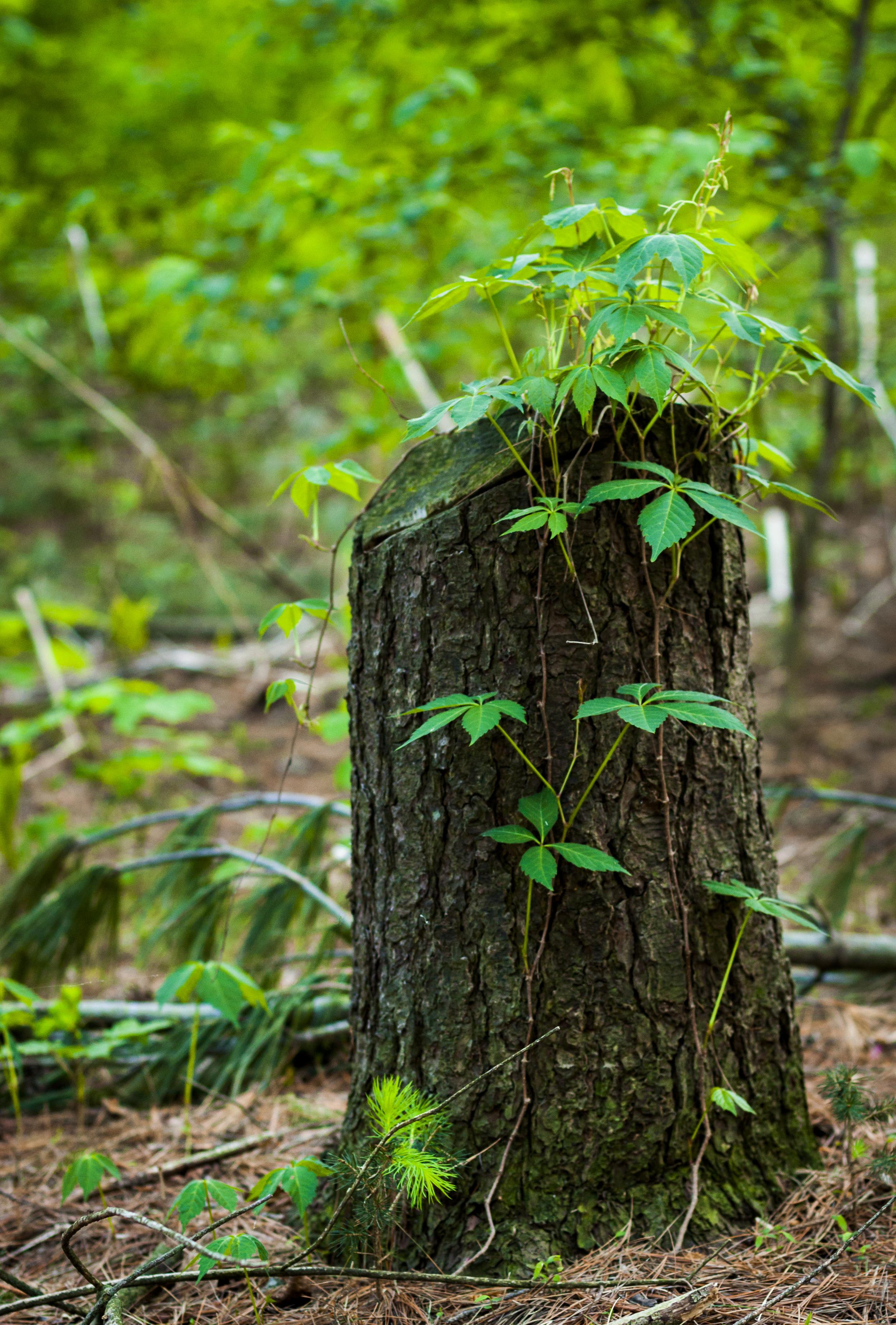 Log Growth.jpg