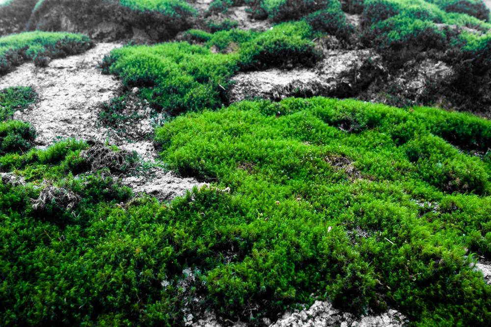 Write Lighting Green Landscape Microscape Moss Rock.jpg