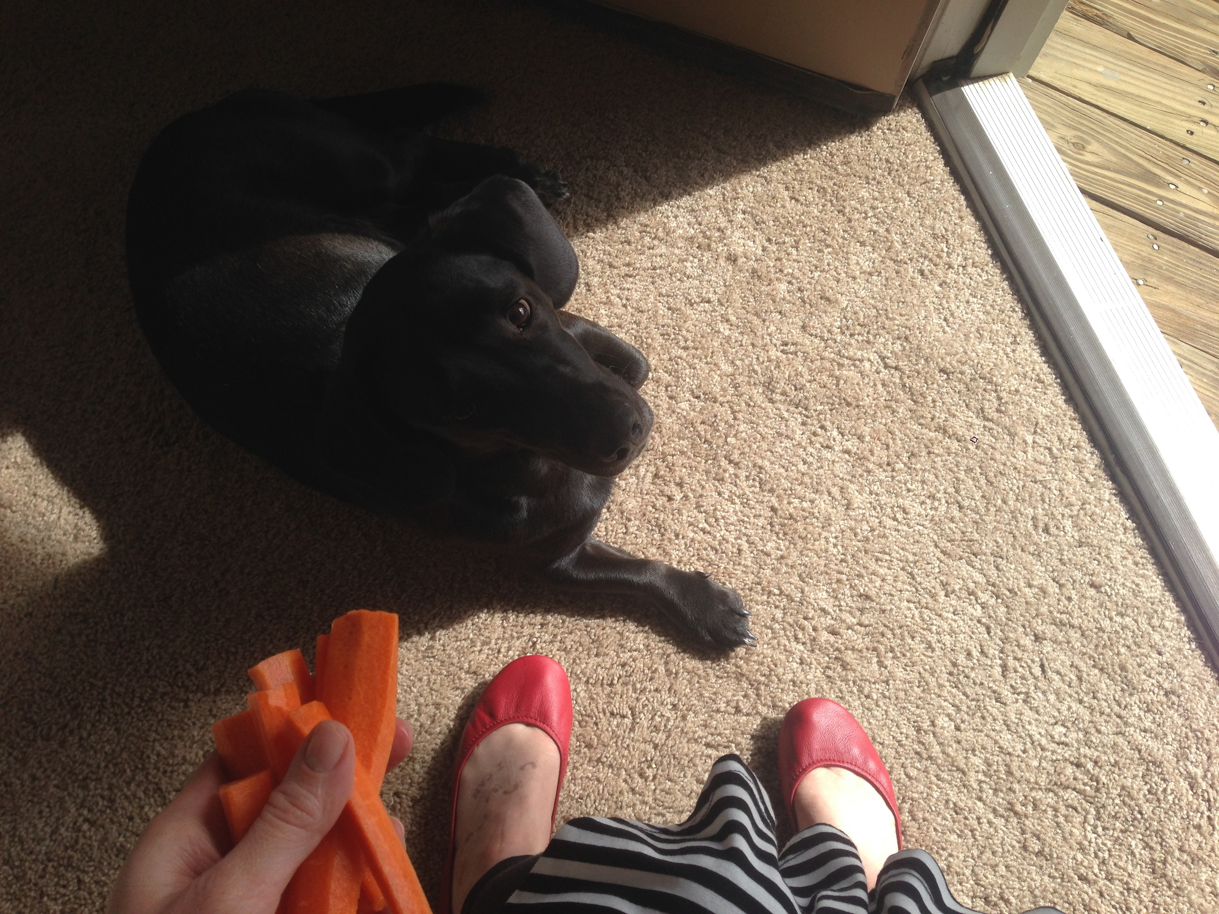 Post-walk carrot stick snack with the fur-monster.