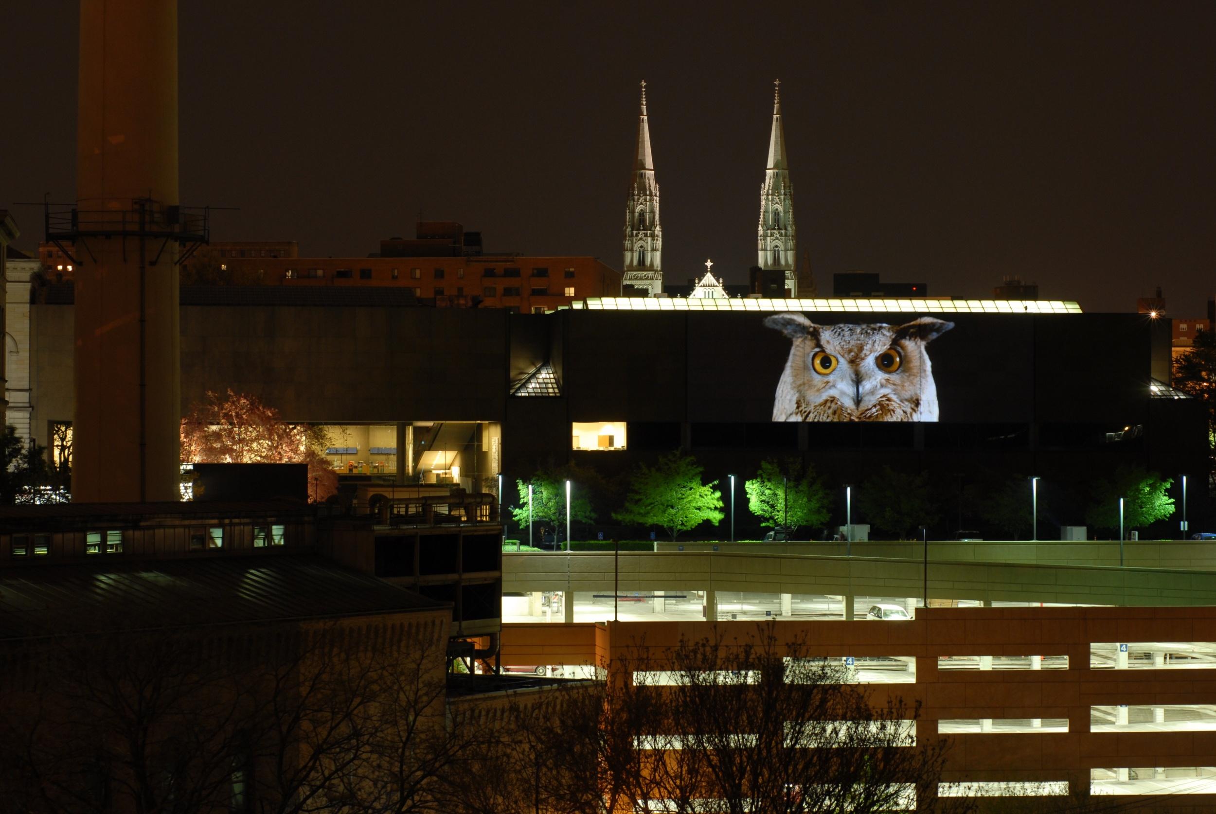 55th Carnegie International installation, Artist Doug Aiken, Migration, 2008