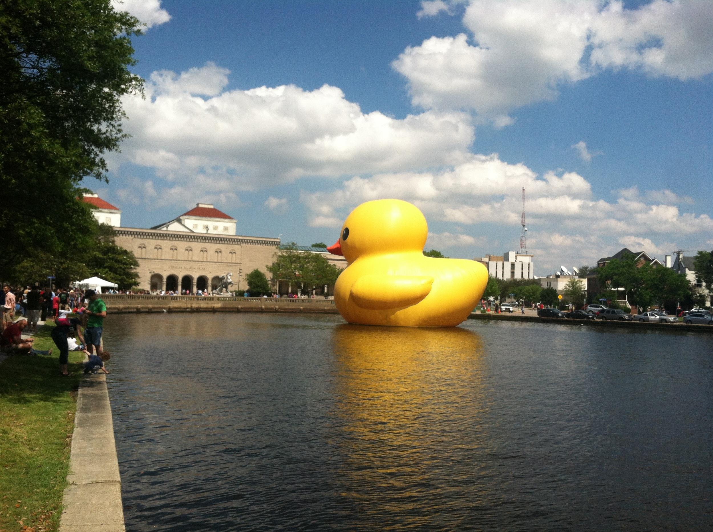 va duck 4.jpg