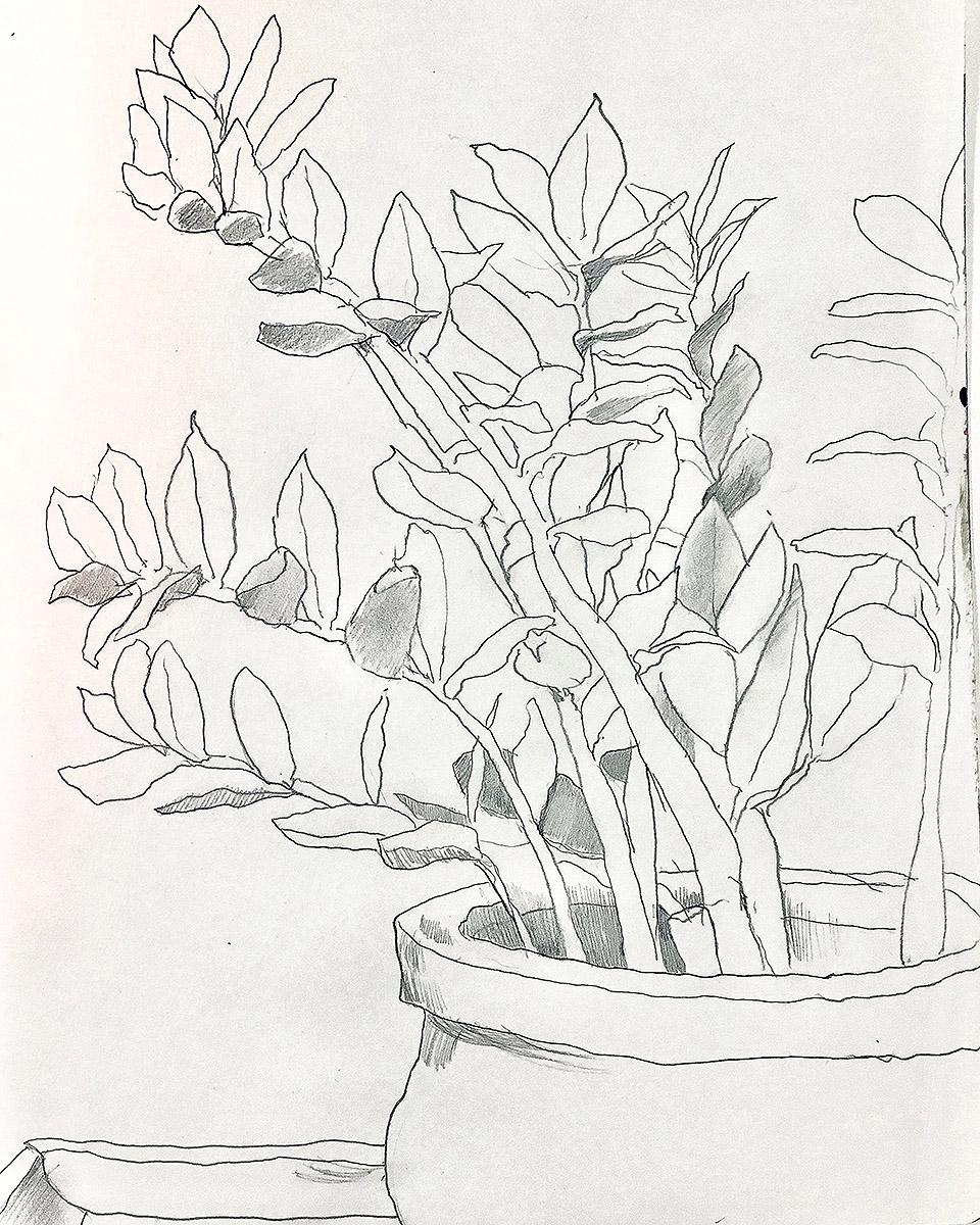 zz plant_sm.jpg