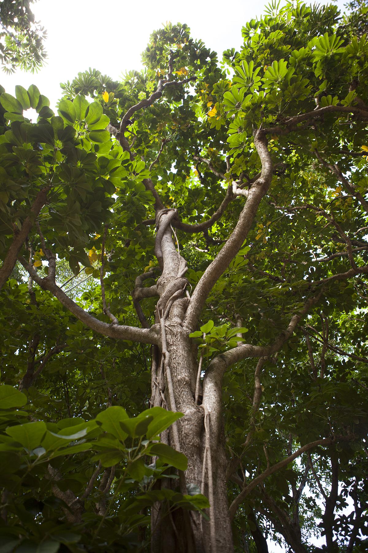 plant003.jpg