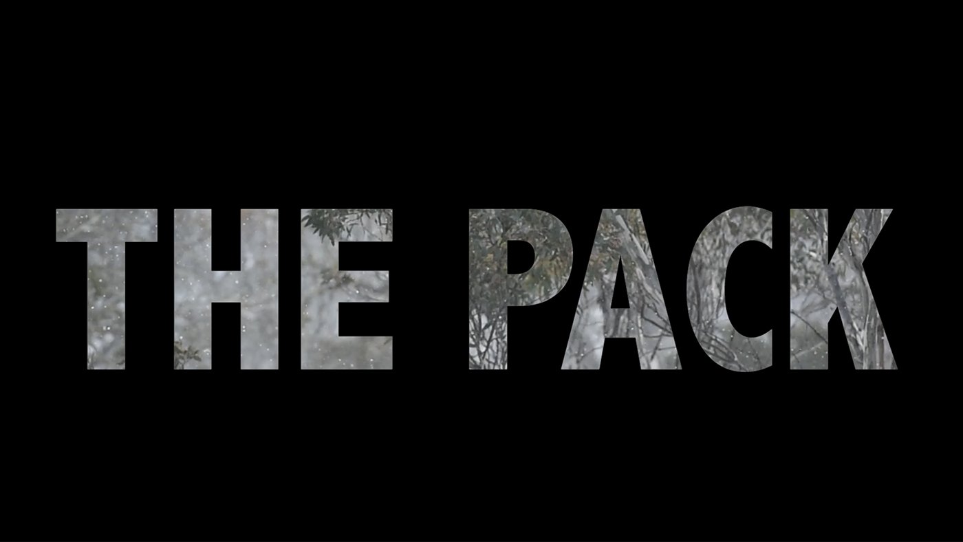 A short documentary film about one pack - and other dogs who not so lucky.  Click here to see the film.