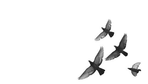 flying-birds.jpg