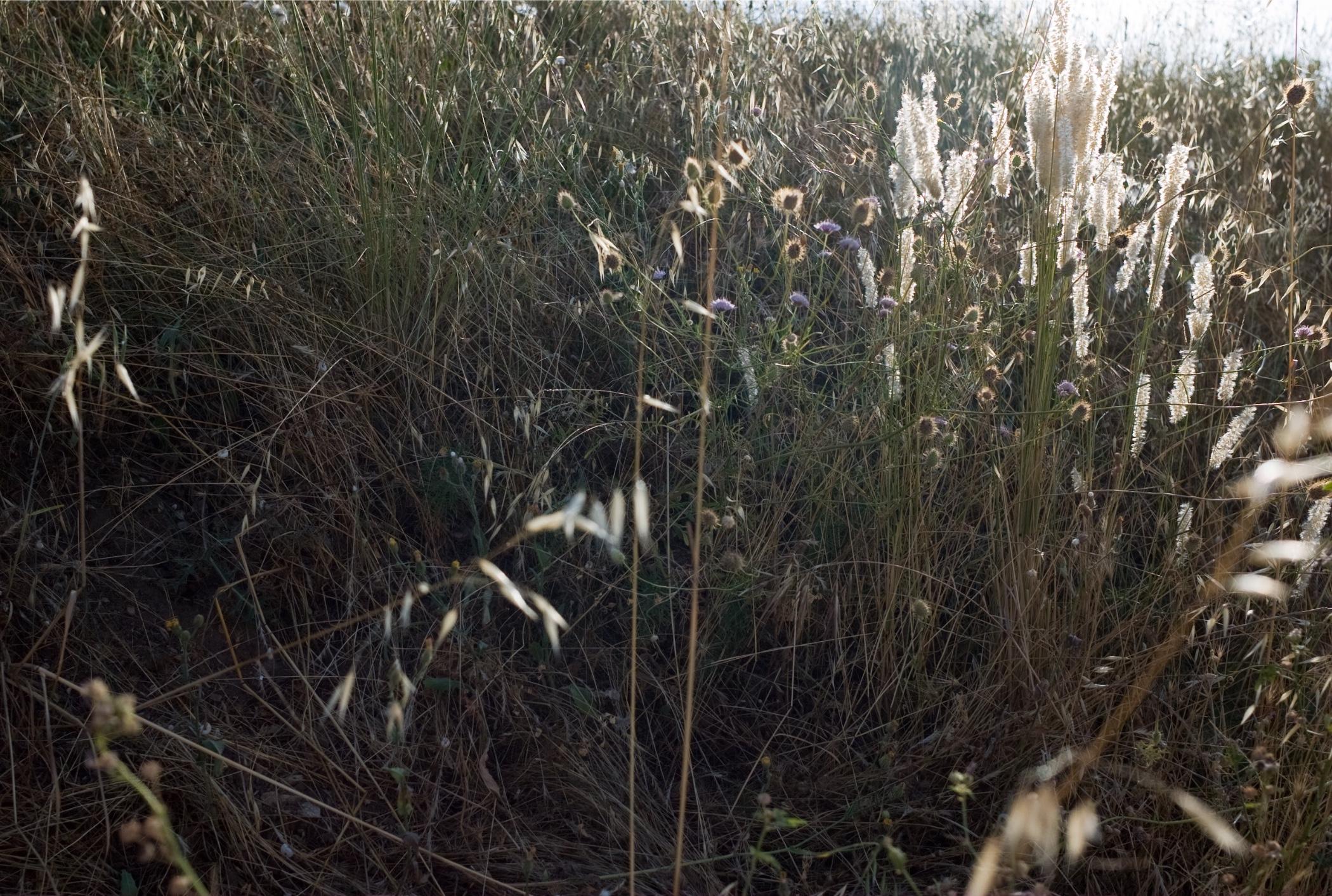 herbes 2.jpeg