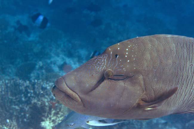 Fish42.jpg