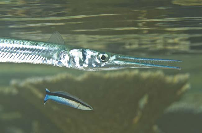 fishy14.jpg