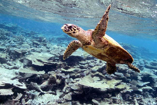Maldives (3).jpg