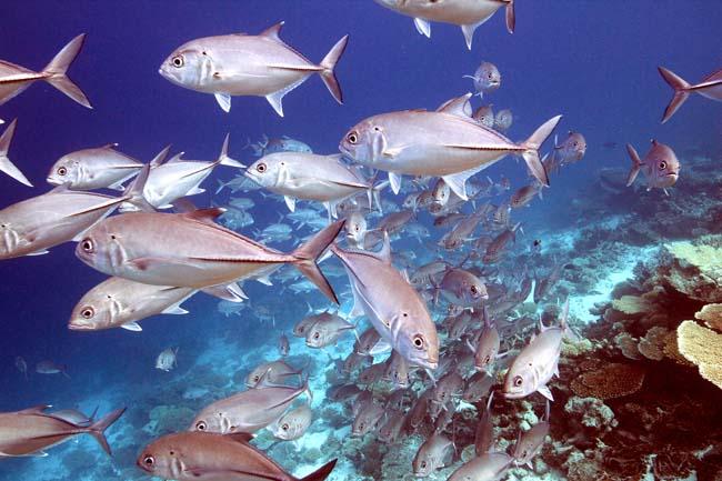 Maldives (38).jpg