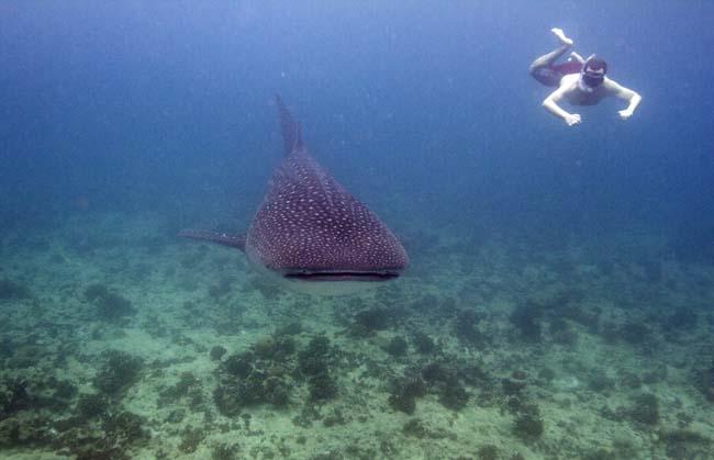 Shark22.jpg