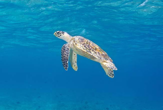 Turtle3 copy.jpg