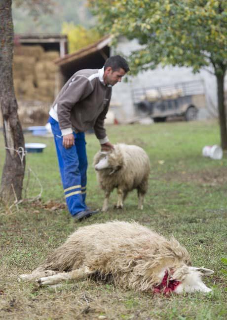 Kosovo13.jpg