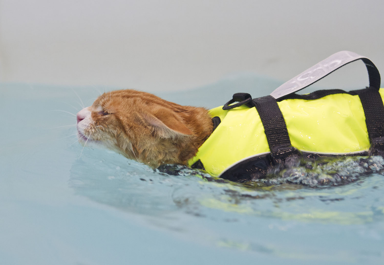 http://www.express.co.uk/news/uk/533661/Soggy-Moggy-Meet-the-cat-who-loves-swimming