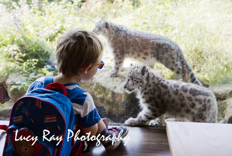 Snow Leopard Cubs21.JPG