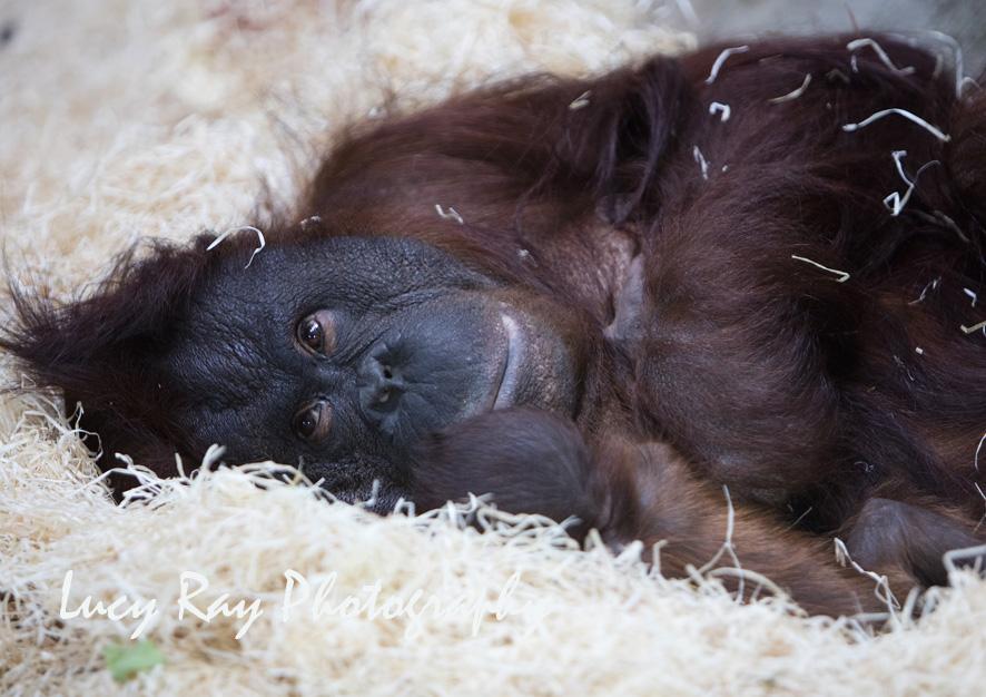 Orangutan Baby8.jpg