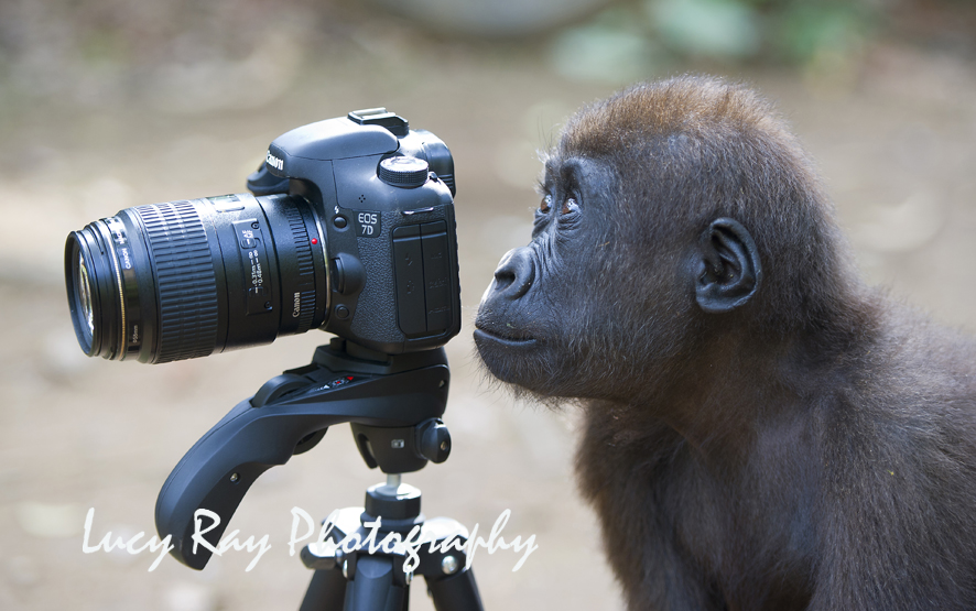 http://www.dailymail.co.uk/news/article-2206689/Wildlife-lens-Glory-animal-kingdom-captured-stunning-award-winning-photographs.html  https://www.telegraph.co.uk/news/earth/earthpicturegalleries/9556097/London-Zoo-reveals-winners-of-the-ZSL-Animal-Photography-Prize-2012.html?frame=2345776