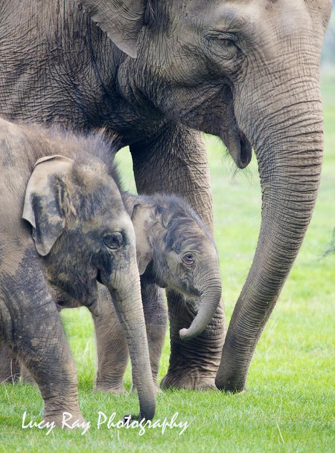 Baby Elephant5.JPG