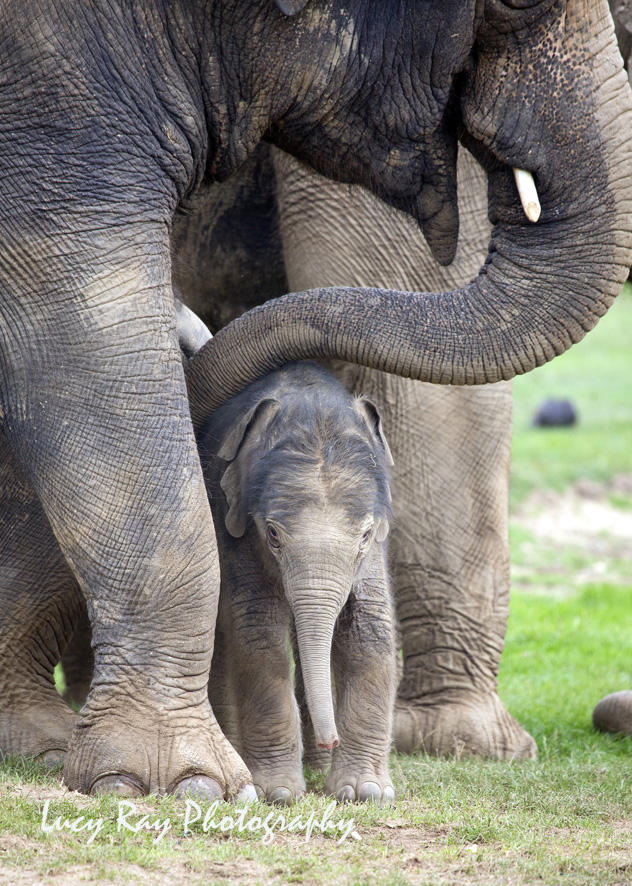 Baby Elephant10.JPG
