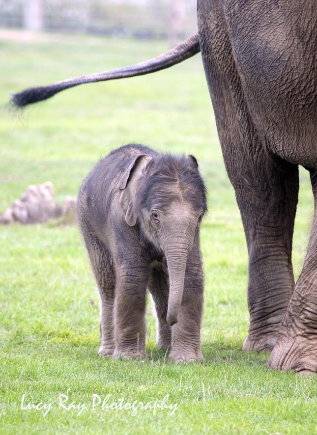 Baby Elephant8.JPG