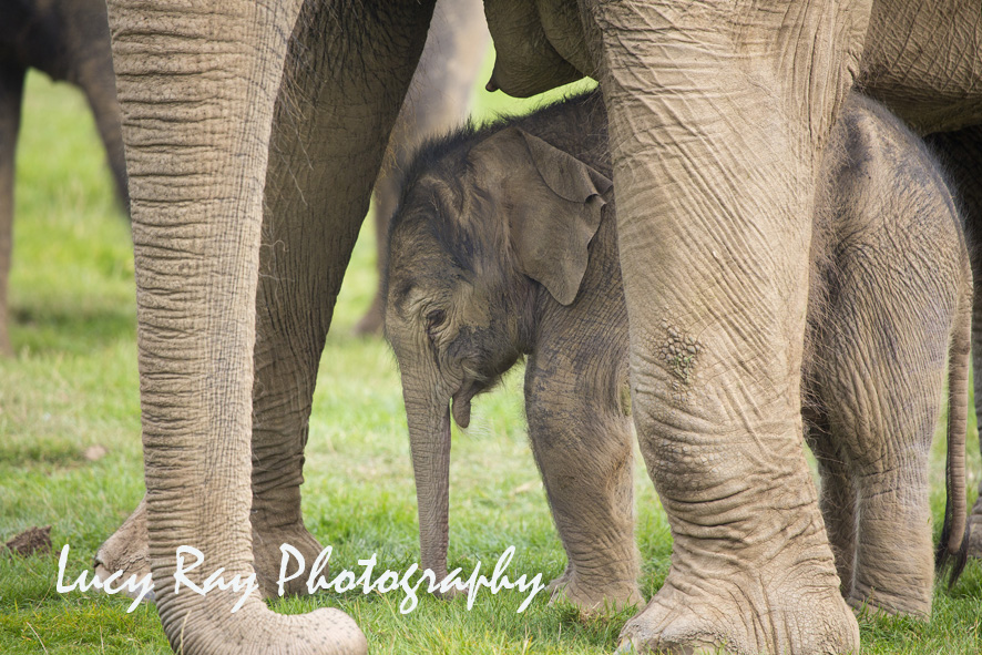 Baby Elephant1.JPG
