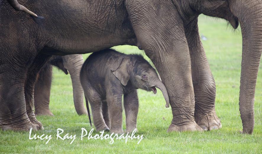 Baby Elephant3.JPG