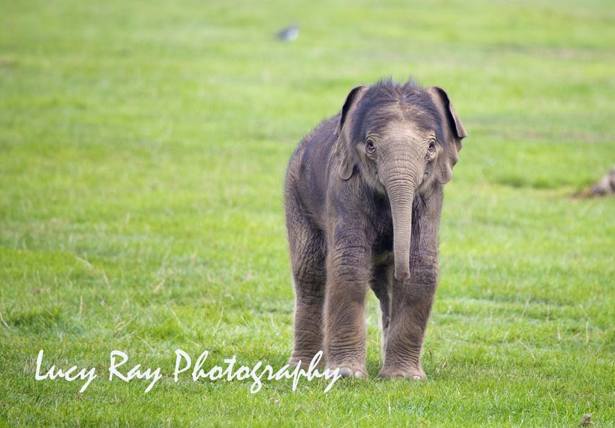 Baby Elephant4.JPG