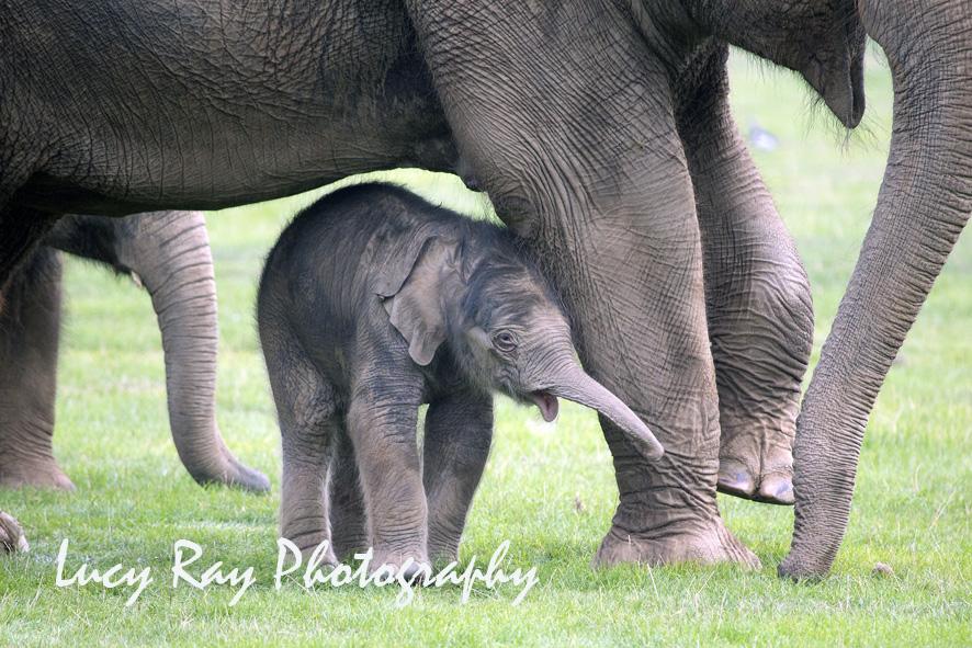 Baby Elephant9.JPG