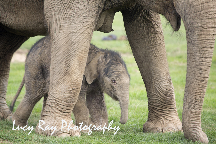 Baby Elephant13.JPG