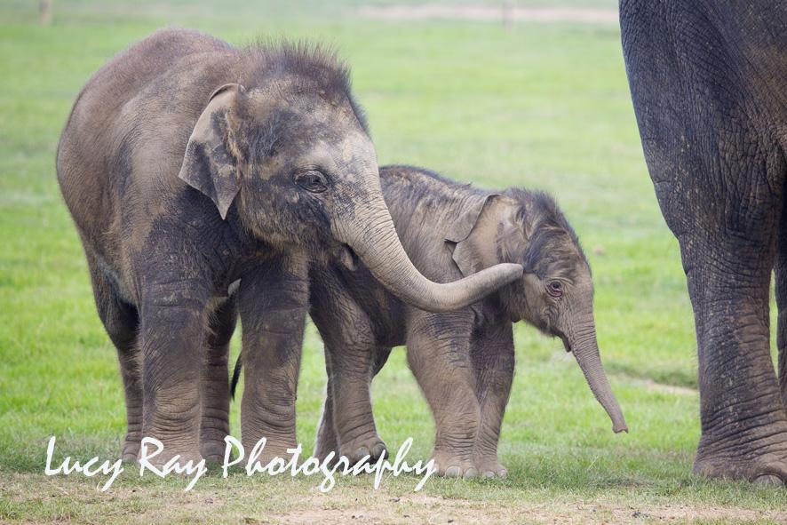 Baby Elephant11.JPG