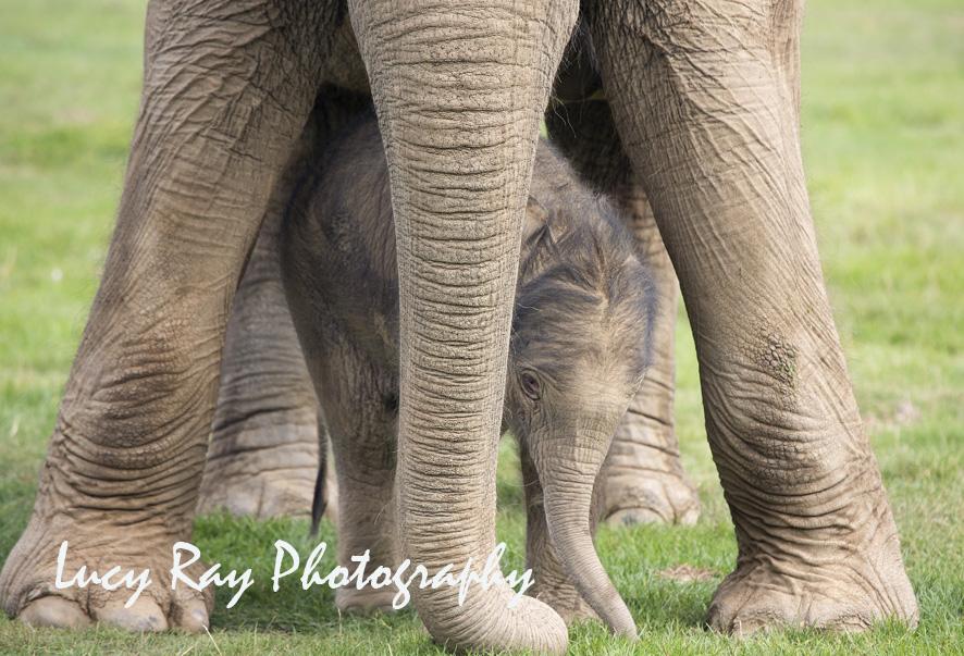 Baby Elephant14.JPG