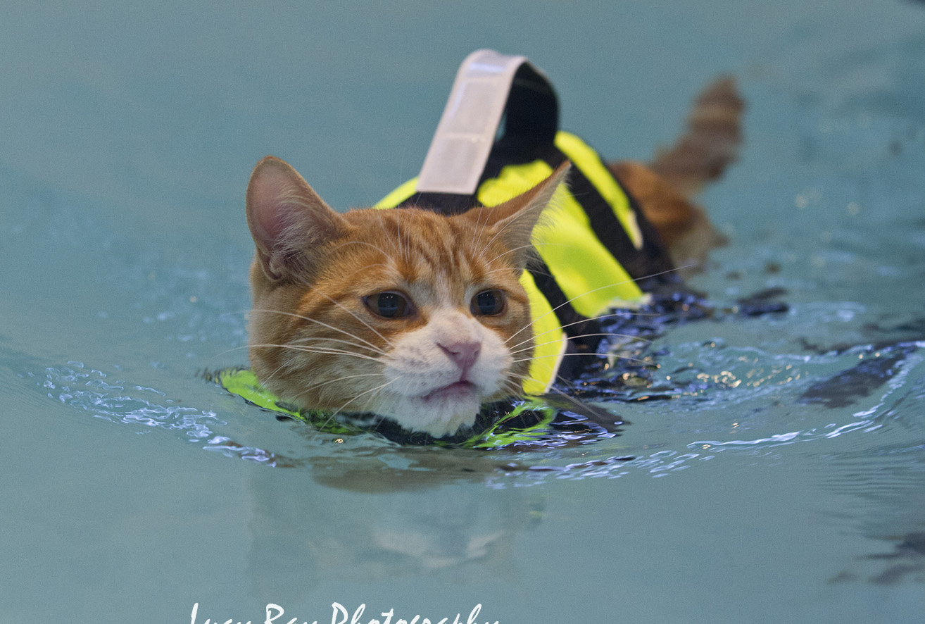 Roy the swimming cat was featured in several publications around the world!  http://www.mirror.co.uk/news/uk-news/cats-might-famous-hating-water-4602776  http://www.express.co.uk/news/uk/533661/Soggy-Moggy-Meet-the-cat-who-loves-swimming  http://metro.co.uk/2014/11/11/a-cat-in-a-hi-vis-life-jacket-having-a-swim-spoiler-he-doesnt-enjoy-it-4943809/  http://www.huffingtonpost.co.uk/2014/11/10/cat-swimming-hydrotherapy-treatment_n_6132722.html  http://nypost.com/2014/11/10/adventurous-feline-isnt-afraid-to-get-his-paws-wet/