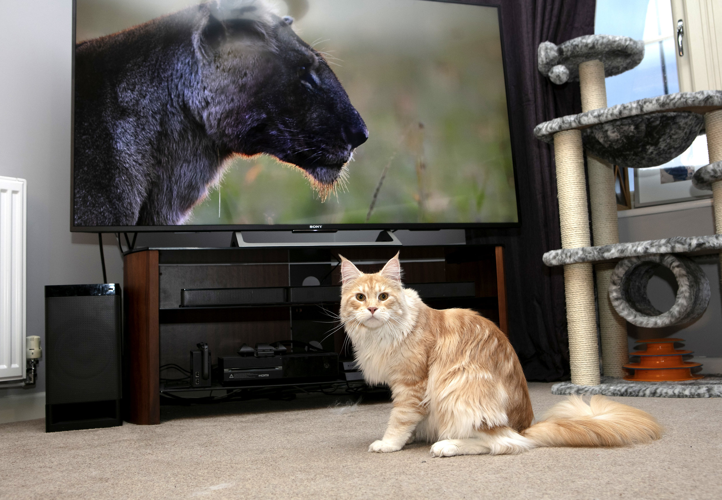 https://www.dailymail.co.uk/femail/article-6477343/New-HD-TVs-twice-powerful-used-mean-pets-FINALLY-watch-telly.html
