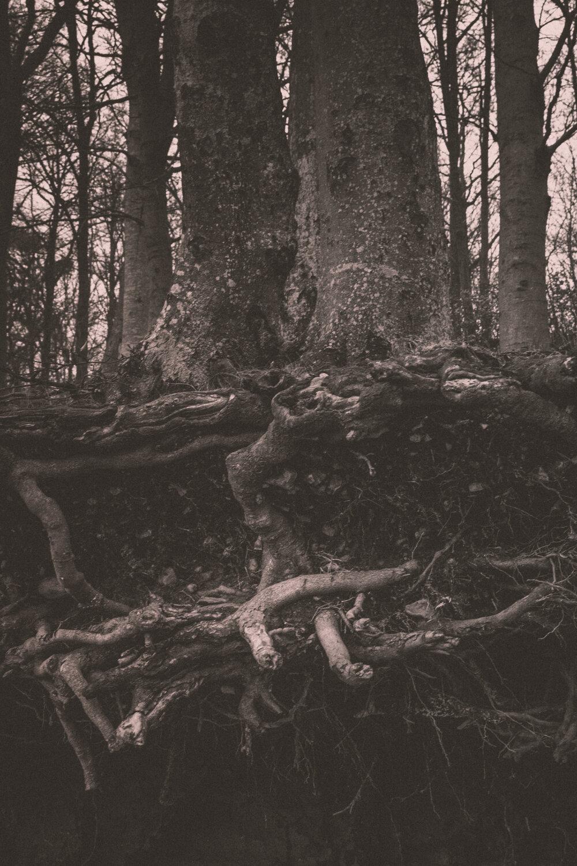 Rootsprojectsbirgitteheiberg.jpg