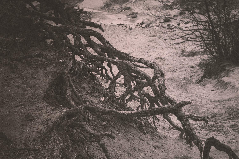 Rootsprojectsbirgitteheiberg-3.jpg