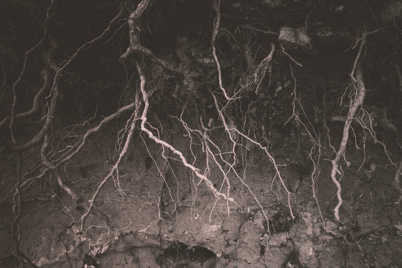 Rootsprojectsbirgitteheiberg-2.jpg