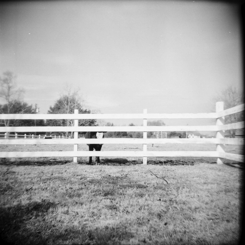 cow portrait_8.png
