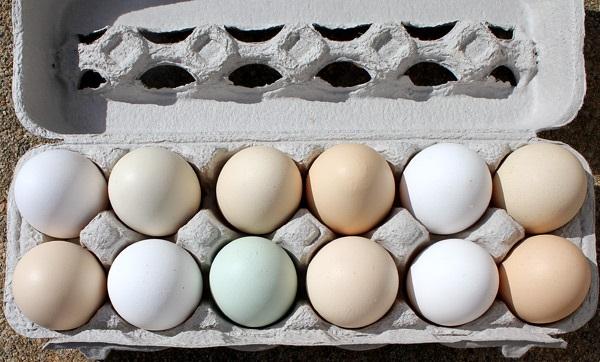 dozen eggs.jpg