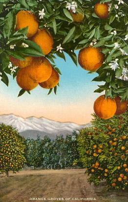 Orange-GrovePosters.jpg
